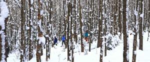 snowshoeing and fat biking